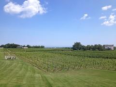 Fielding Estate Winery