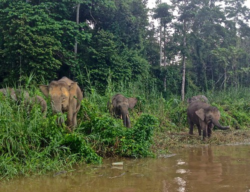 so many elephants!