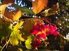 Herbst by kadege59