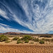 Nevada Desert Desiccation by Fort Photo