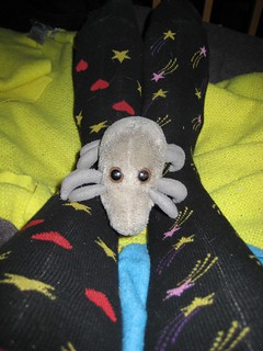 Sock Mite