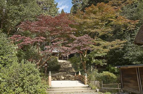 【写真】2013 紅葉 : 日向大神宮/2020-10-05/IMGP3372