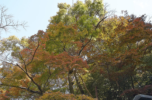【写真】2013 紅葉 : 日向大神宮/2020-10-05/IMGP3369
