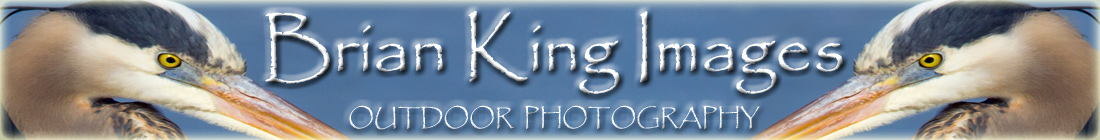 Brian King Images