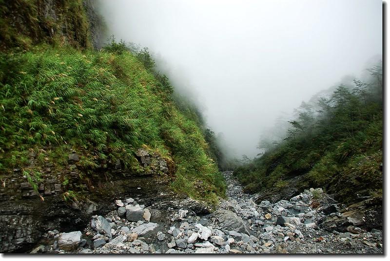 霧鎖萬榮林道 1