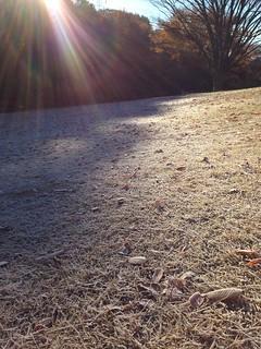 芝生一面霜が降りる師走