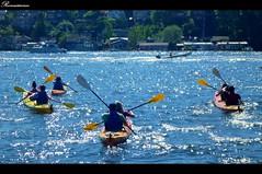 湖面荡舟 Kayaking lake union