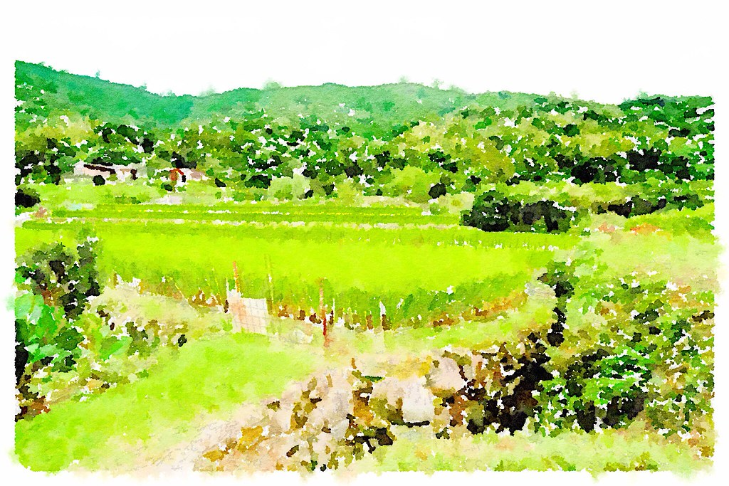 Waterlogue