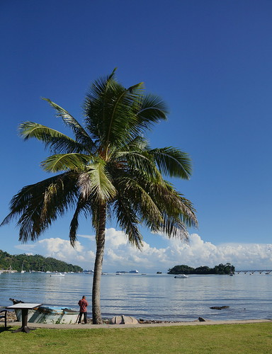bridge cruise trees sea holiday beach island sand dominican republic sony palm caribbean alpha a77 2013