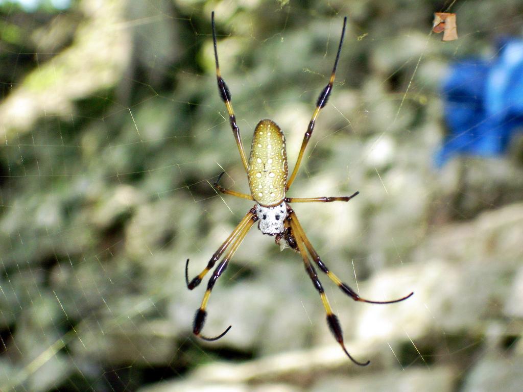 6. Biodiversidad inquietante. Autor, Mike Fox