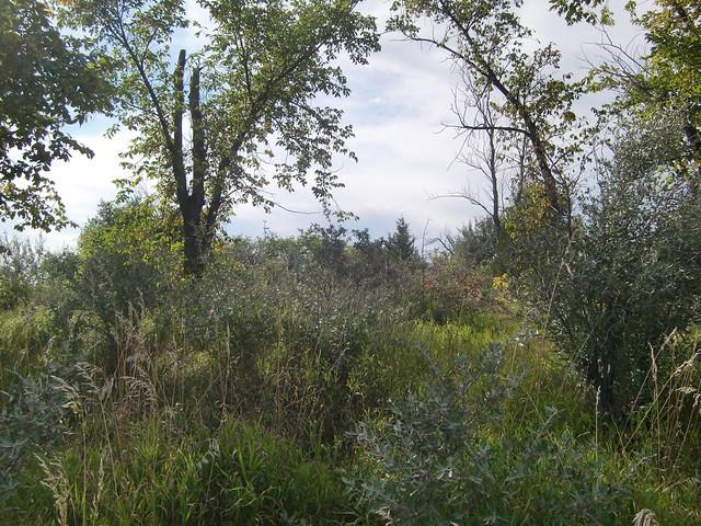 spring lake park berry bushes