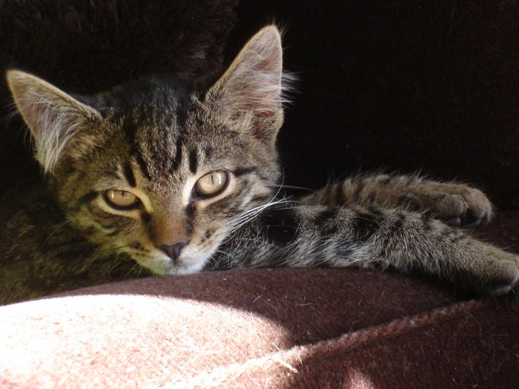 foster kitten Winker