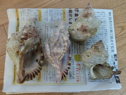 ほら貝とサザエ