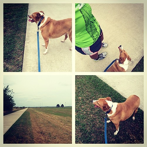 The story of a girl desperately wanting to get her dog to walk back to the car but he won't. #runchat #running #fitfluential #fitness