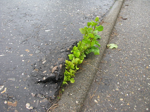 Nature stronger than asphalt
