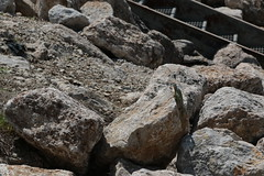 boulder, rubble, outcrop, geology, bedrock, rock,