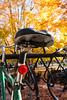 Fall n bikes2_MG_1420