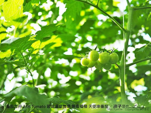 番茄方舟 ARK Tomato 玻璃溫室農場 無毒種植 天使串番茄 36