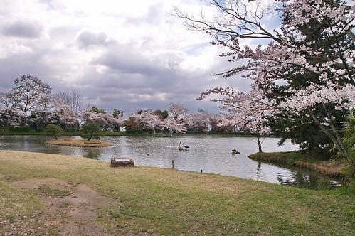 【写真】2013 桜 : 大覚寺/2020-09-15/IMGP9429