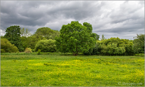 chilternscommonsoughtonhead commonsteviepixphoto2013hitchinjulylandscapesummerhertfordshirehertsengland