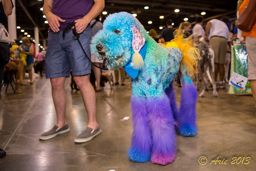 36th Annual Reliant Park World Series of Dog Shows