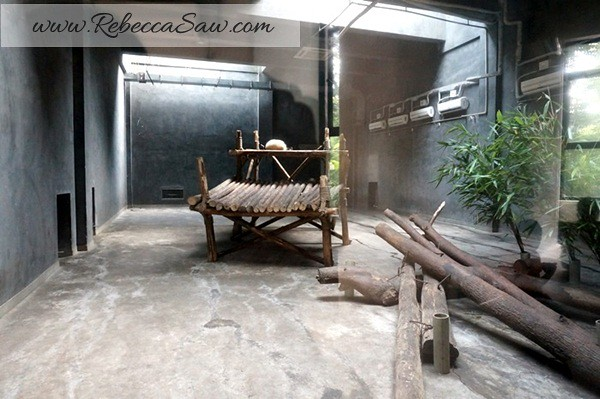 Chengdu - Panda Breeding Farm-043