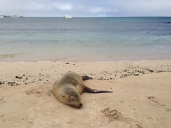 Sea Lion really chilling out