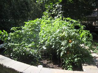 garden August 2013