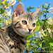 Fizz The Bengal Cat by thestourman