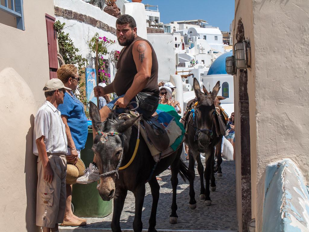 Oia Town Donkey's