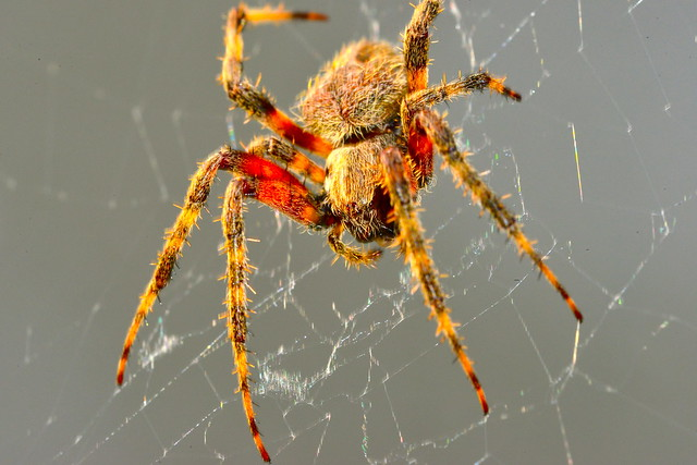 Spider living on my glass front door