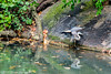 Heron in Central Park - The Lake (2)