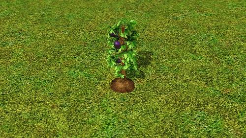 purpleeggplant