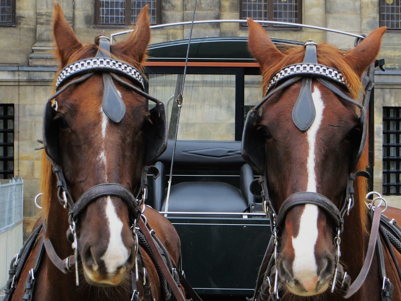 horse-symmetry