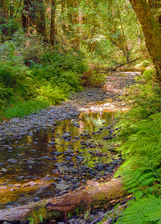 Muir woods national monument join group