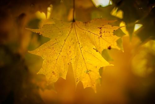 IMAGE: http://farm6.staticflickr.com/5539/10759712066_dca434fbb5.jpg