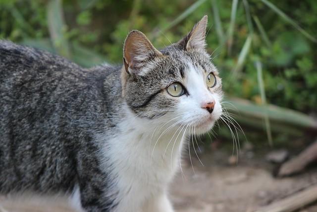 Sr. Gato