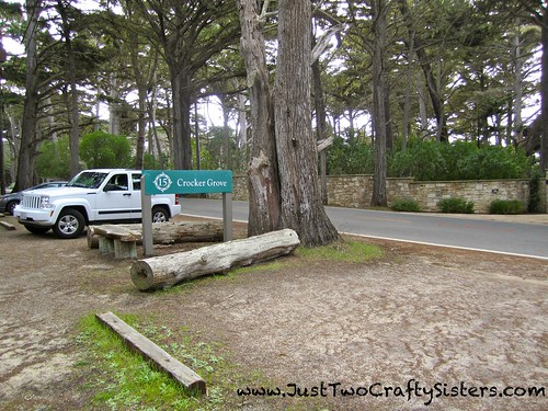 17 Mile Drive- Crocker Grove