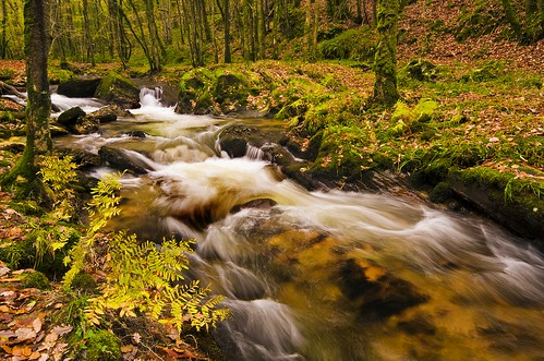 rivière en sous bois