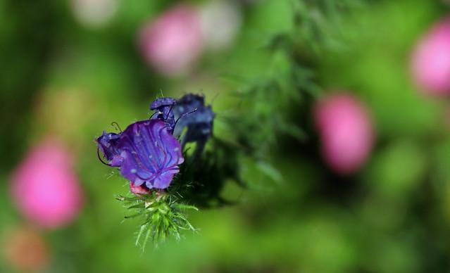 Flor 25