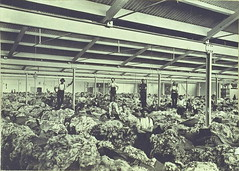 Interior of Port Adelaide wool store