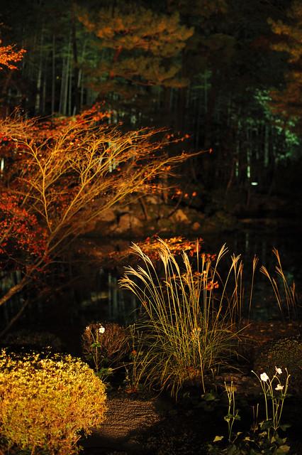 夜香南禅寺