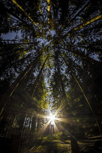 Sun in the forest by Zdenek Papes