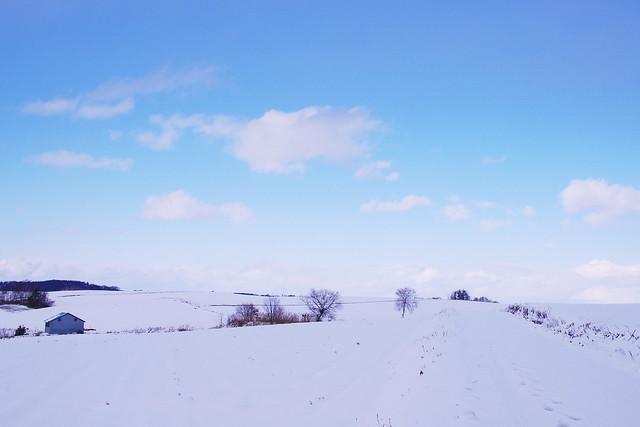 冬ざれの道