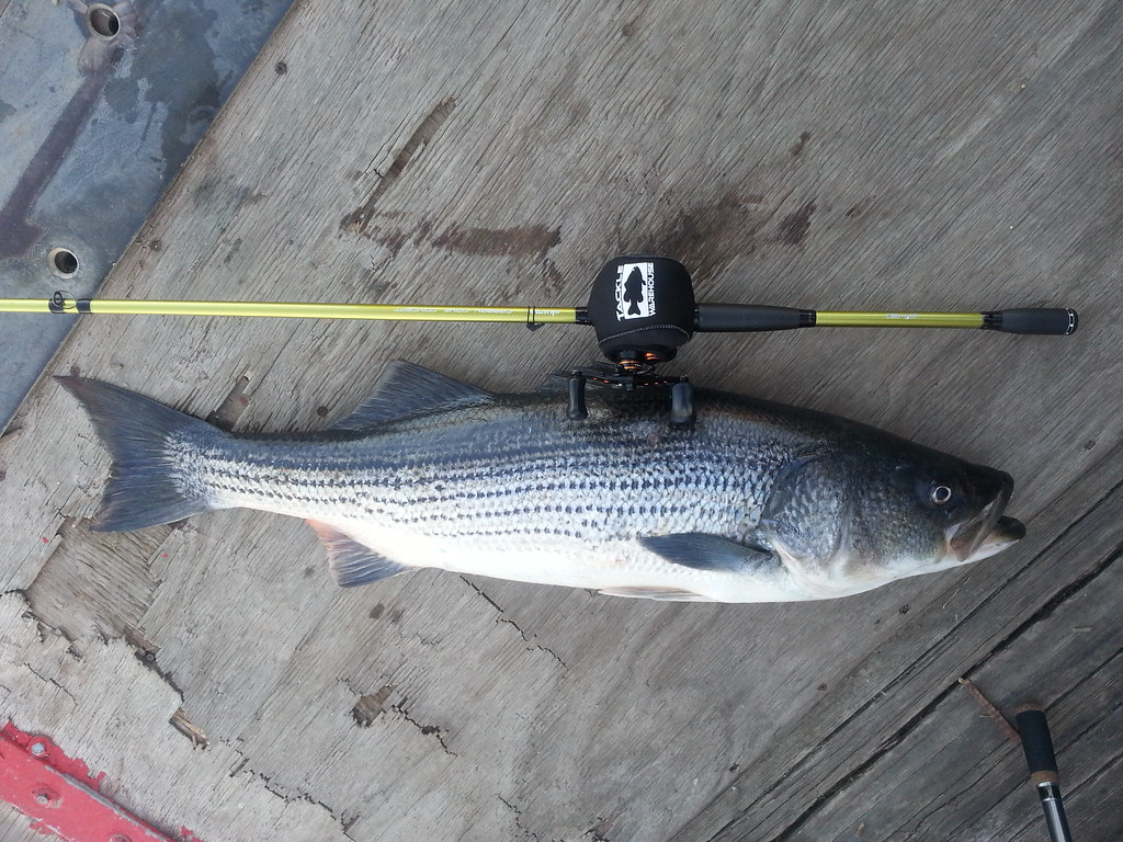 Great start to a new year lake skinner fish report 01 01 2014 for Lake skinner fishing report