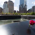 Flower at 9/11 Memorial