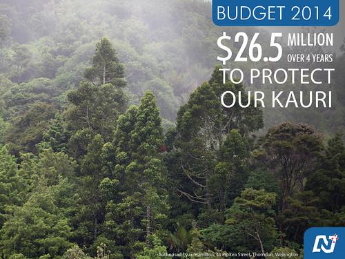 Protecting our Kauri