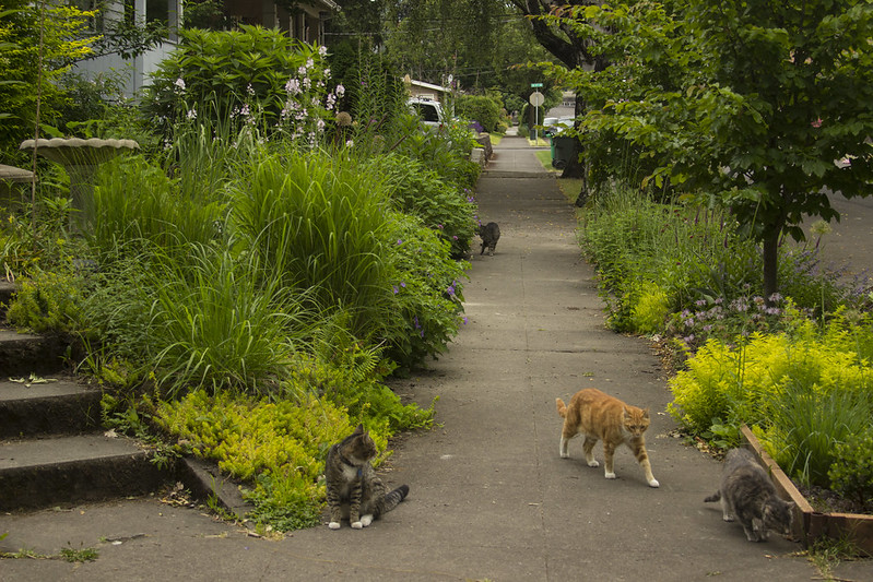 North Garden With Cats