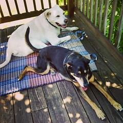 My boys lounging on the deck #dogstagram #seniordog #ilovemydogs #instadog #coonhoundmix #labmix #ilovebigmutts
