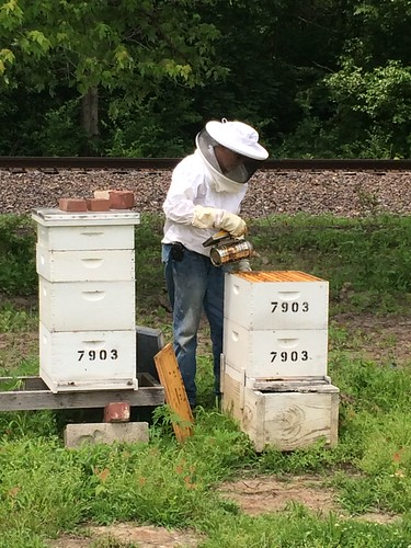 Loveless uses smoke to calm the bees when he opens the boxes for inspection. Smoking the bees allows the beekeeper to work in the hive while the colony's defensive response is interrupted.